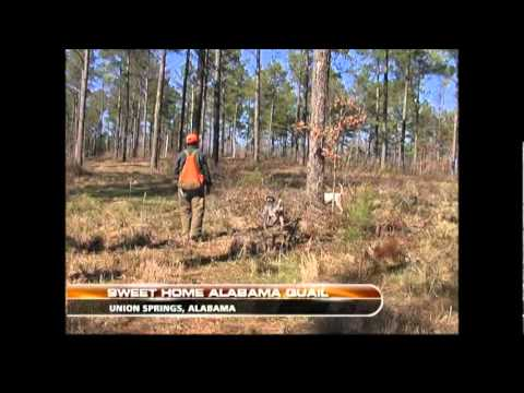 Great Southern Outdoors: Alabama Quail Hunt with Bob Redfern's Outdoor Magazine