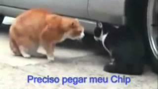 Gatos hablando