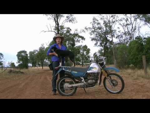 Training Dog to Ride on Bike - Part 1