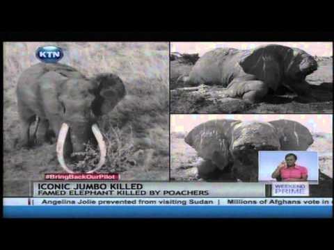 Kenya's iconic elephant