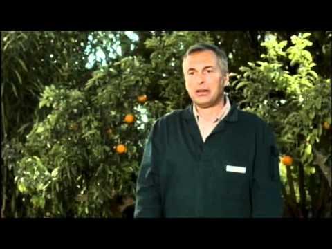 Fruitvariatie (Pickwick)
