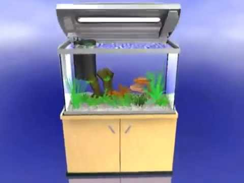 Filtre aquarium interne installation