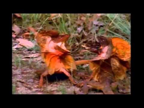thực hành: xem phim về tập tính của động vật a10k47- ngô quyền ! :)