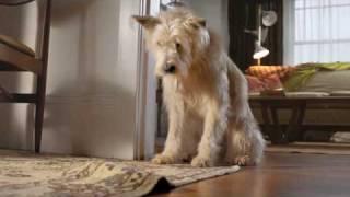 アメリカの保険会社「Travelers」のCM。骨がなくならないか心配な犬
