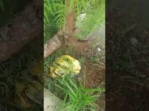 Vídeo Vídeo: Assassino em série de cachorros pode estar agindo no Jardim Paulista