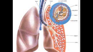 Remedios caseros para curar la bronquitis