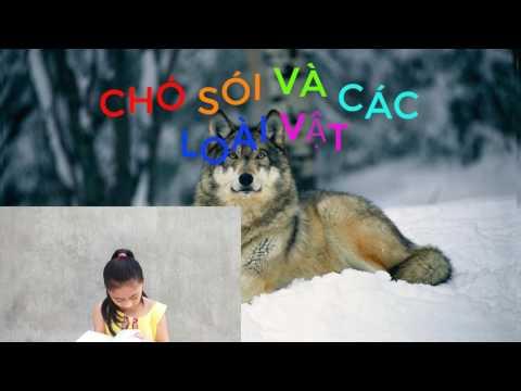 Chó sói và các loài vật - truyện cổ tích - subin tivi 😃😃😃😃