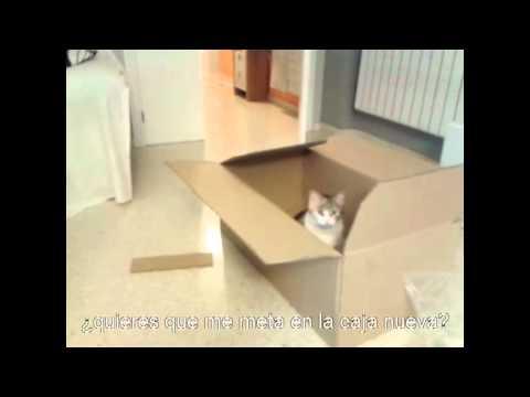 Mi gata y su caja nueva (gatos graciosos)