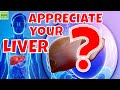 Appreciate Your Liver Why You Should Appreciate Your Liver and How