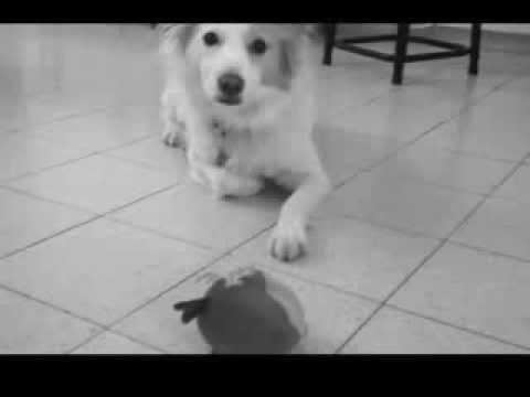 נעמי כפית vs פייפר הכלבה