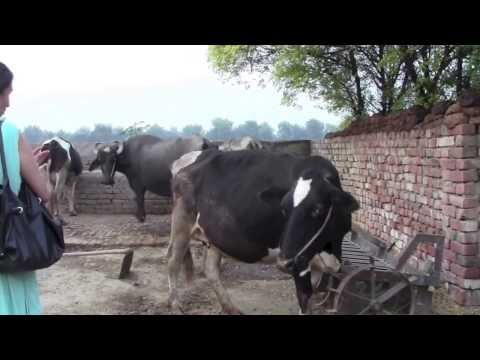 Visits To Our Villages In Punjab 2013