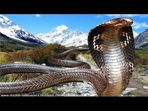 Thế giới loài rắn - kẻ hủy diệt thống trị rừng sâu