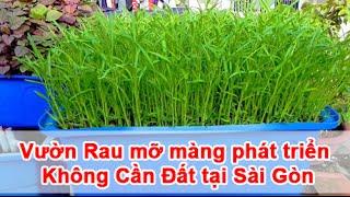 Vườn Rau mỡ màng phát triển Không Cần Đất tại Sài Gòn