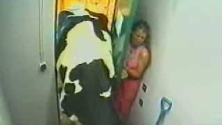 Asustada por una vaca