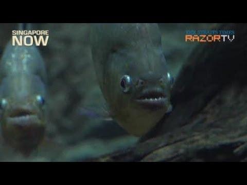 Maximum security for fishes, not criminals