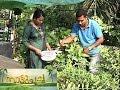 സസ്യമൈത്രി പൊലീസ് Rooftop cultivation in police quarters Manorama News Nattupacha
