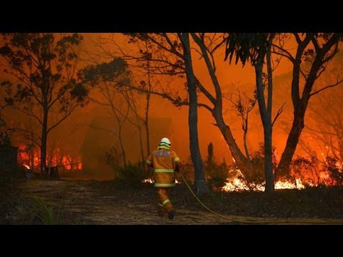 Australian wildfires: looters ransack homes