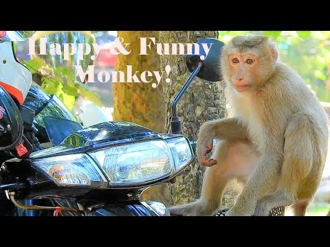 Fantastic Monkey Rose Funny Train Fighting With Friends|Amazing Pigtail Rose Monkey