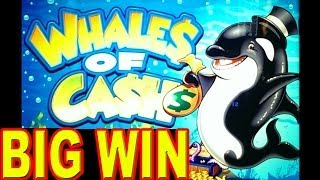 Whales Of Cash BIG BIG WIN Las Vegas Slot Machine Winner