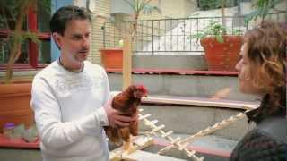 Yanick Dion - Entraineur d'animaux - Poules Académie- Chienposium