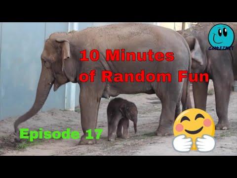 10 Minutes of Random Fun Videos Episode 17
