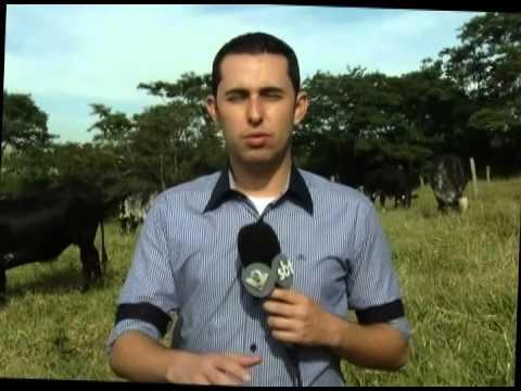 Escassez de chuvas provocam aumento no valor do leite