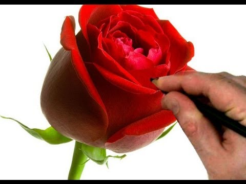 How to Draw a Rose Step by Step -lxzBH1rh7lw