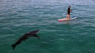 サメを見つけて、パドルボートで近づく男性。怖すぎわろたw