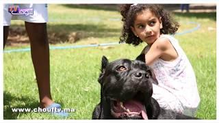 هكــذا تعامل مربي الكلاب مع قانون منع الكلاب من الحجم الكبير بالمغرب   |   أنا و صاحبي الحيوان