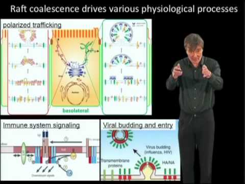 Kai Simons Part 2  Lipid rafts as a membrane organizing principle