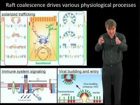 Kai Simons Part 2  Lipid rafts as a membrane organizing principle