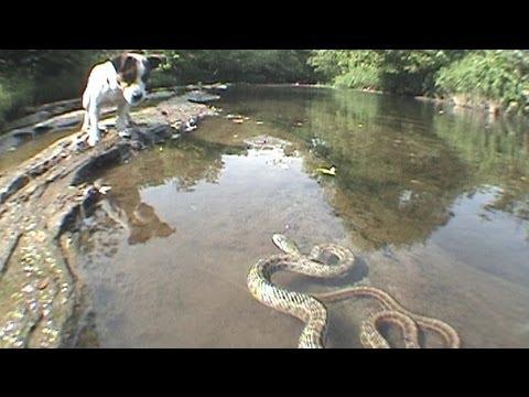Snake vs Dog