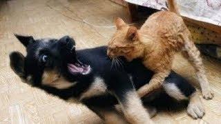 Perros Asustados Por Gatos - Videos De Risa - Animales - [Nuevo]