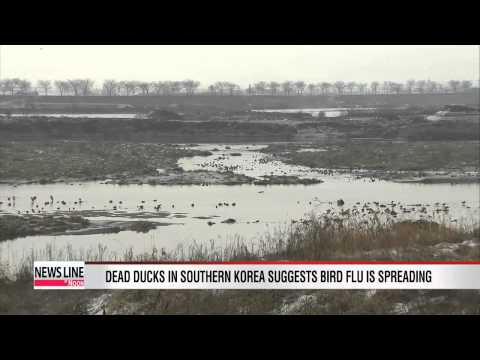 More dead ducks found in southern Korea