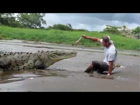 image vidéo   حذاري +18 : تمساح يبتلع رجل