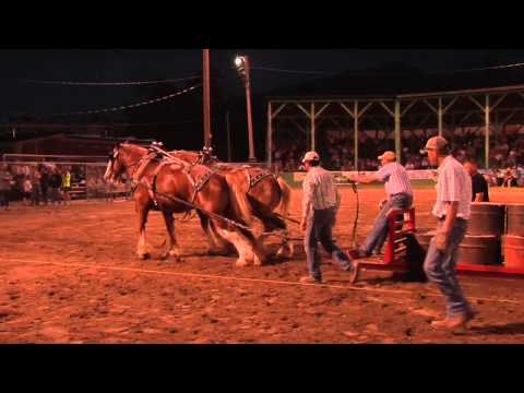 Draft Horse Pull Contest 2014