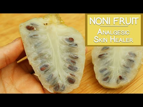 Noni Fruit, Potential Skin Healer, Immune Booster and Analgesic