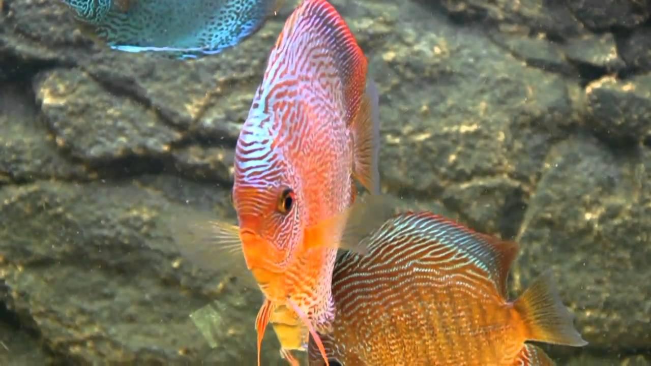 fishnet amatoriale