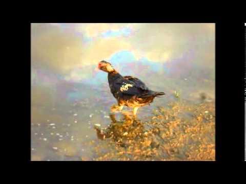 World Wildlife Day, additional bird footage, filmed 23 September 2013.