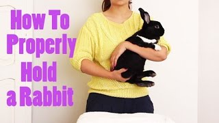 How to Properly Pick Up & Hold a Bunny
