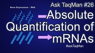 Absolute Quantification of mRNAs - Ask TaqMan #26