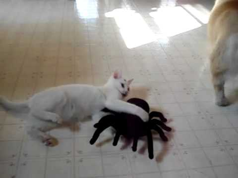 Cat Loves Toy Spider
