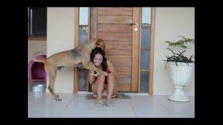 Ataque de cachorro ao próprio dono