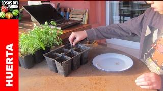 Germinar y plantar Perejil y Cilantro.