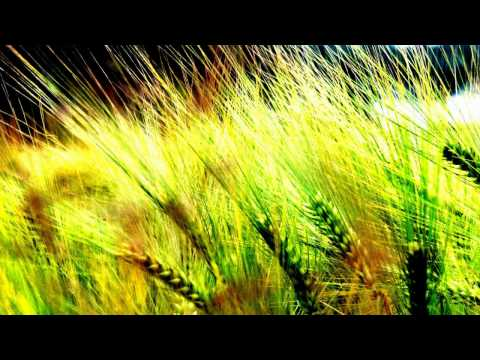 A Deep Summer [Deep House, 2011]