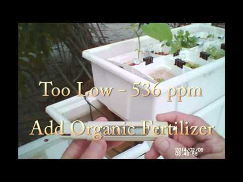 Hydroponic Vegetables Part 3