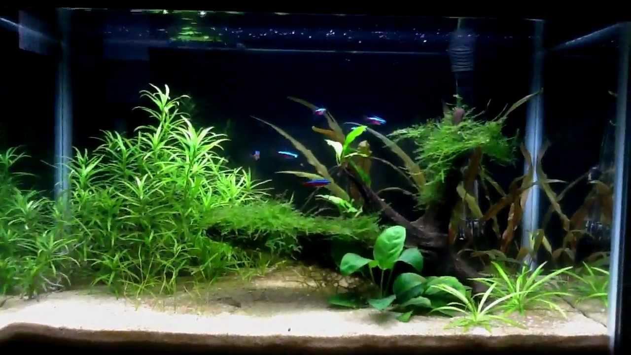 10 Gallon Planted Aquarium - My First Dirt Planted Tank Week 14 ...