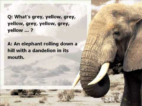 Elephant jokes - photo#8