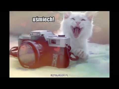 Całkiem nowe śmieszne koty 2014