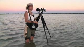 picture of Wildlife Photographer